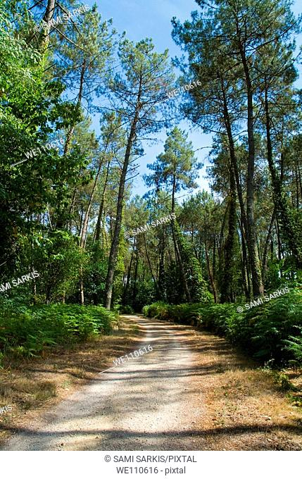 Dirt path through the Landes Forest, Aquitaine, France