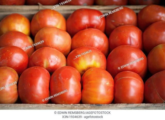 Tomatoes at Lo Valledor central wholesale produce market in Santiago, Chile