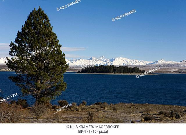 View of Motuariki Island, Lake Tekapo, Canterbury, South Island, New Zealand