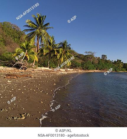 Palm trees in Coast Rica