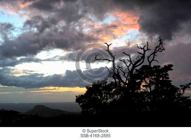 Coasta Rica, Rincon De La Vieja, Tree Silhouetted In Sunset