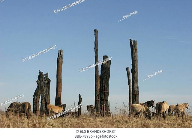 Monument of reclaimed oak logs of more than 8000 years old