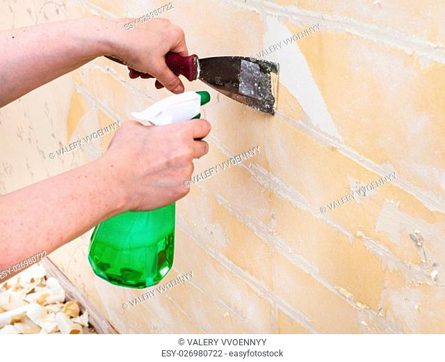 renovation of room: preparation of walls. Cleaning wall from wet old wallpaper with metal spatula