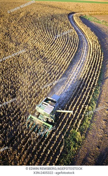 Combine Harvesting corn, Maryland