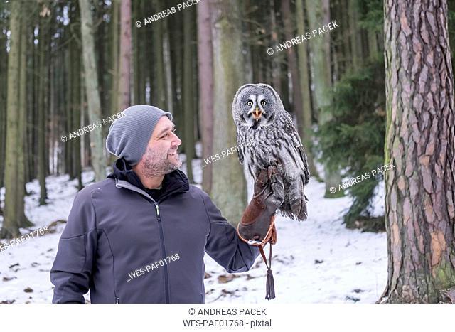 Czechia, Falconer holding great grey owl, Strix nebulosa in forest