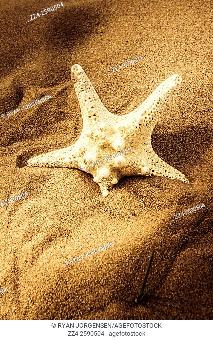 Natural still on a sea star sitting in the afternoon sun on a travel beach destination. Tropical shore details