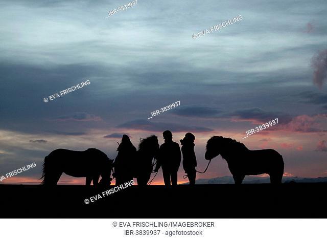 Three Icelandic horses and three riders standing next to each other at sunset, Horn, Höfn í Hornafirði, Hornafjörður, Iceland