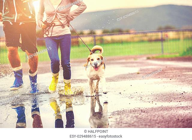 Young couple walk dog in rain. Details of wellies splashing in puddles