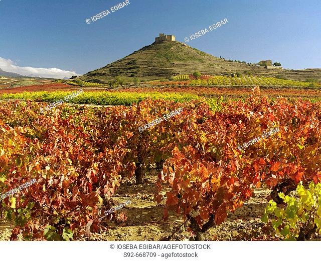 Vineyards and Davalillo castle in background. La Rioja. Spain