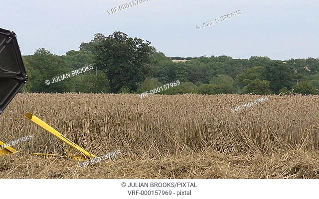 Yellow combine harvester cutting wheat at harvest time - side on detail