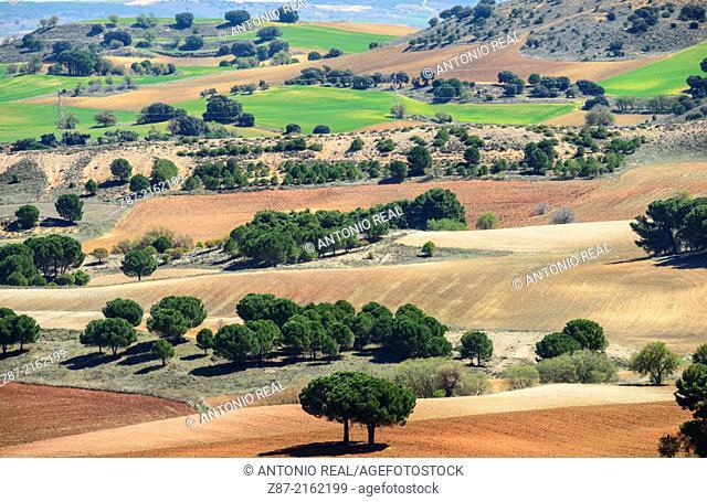 Fields, Villares del Saz, Cuenca province, Castilla-La Mancha, Spain