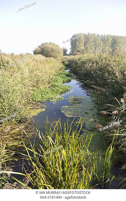 Drainage river channel Minsmere New Cut, wetland landscape at Eastbridge, Suffolk, England, UK
