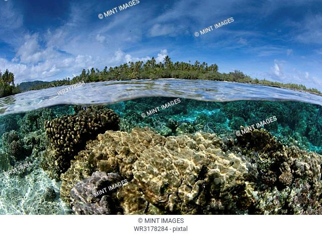 Over/under of the seabed between two small islands near Taha'a, in French Polynesia. Fast flowing water nourishes the coral
