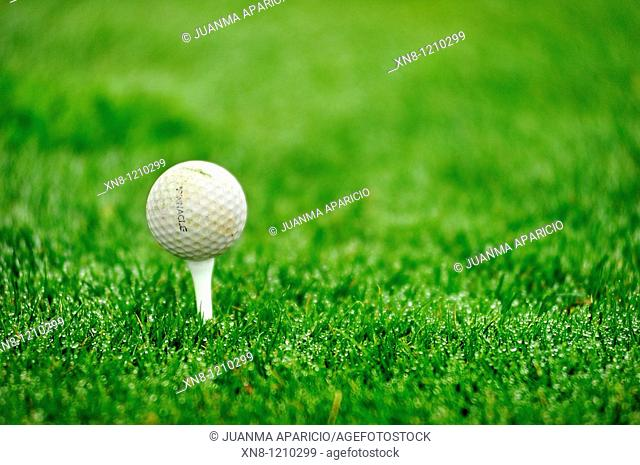Golf ball on tee. Larrabea golf course, Alava, Basque Country, Spain