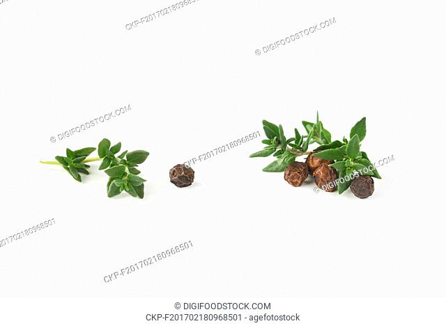 black peppercorns and fresh thyme on white background