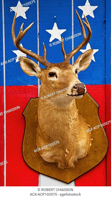 Deer head shoulder mount on a wall depicting a part of the American flag. Outside wall of a roadside eatery, Ketchikan, Alaska, U.S.A
