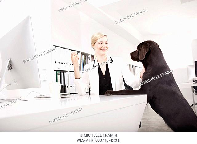 Business woman with her Labrador Retriever in the office