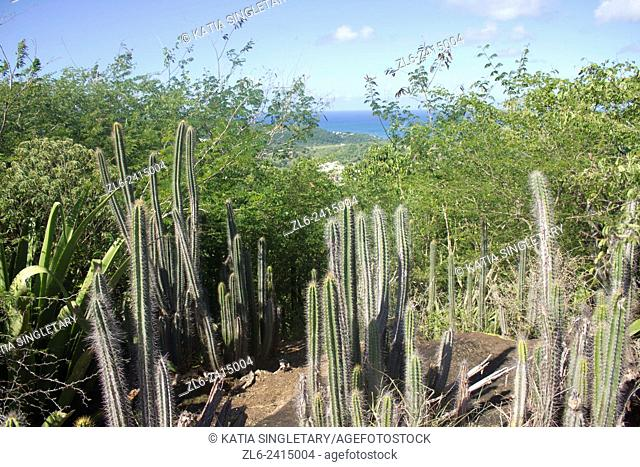 View Of The Ocean And Cactus From A Hike In Sainte Anne French Country