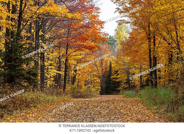 A leaf covered roadway in the deciduous forest of Michigan's Upper Penninsula