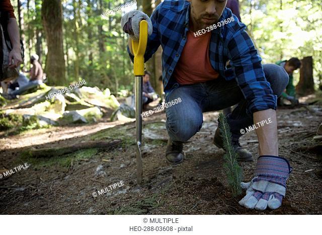 Volunteer planting trees in woods