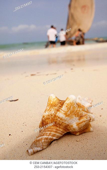 Sea shell in the sand with a dhow sailing out at the background, Nungwi, Zanzibar Island, Zanzibar Archipelago,Tanzania, East Africa