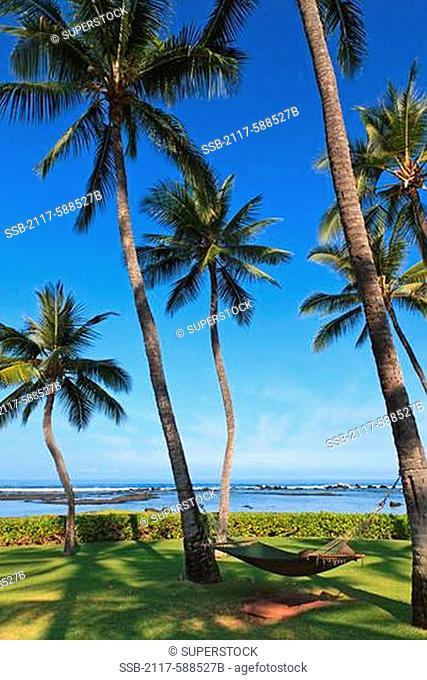 Hawaii, Big Island, Hammock in shade at Kona resort