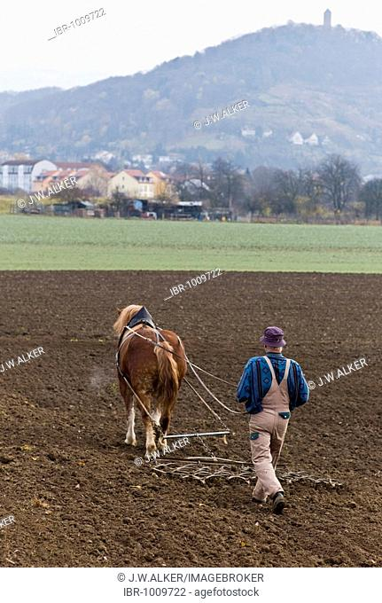 A farmer with a horse ploughs a field, Hesse, Germany, Europe