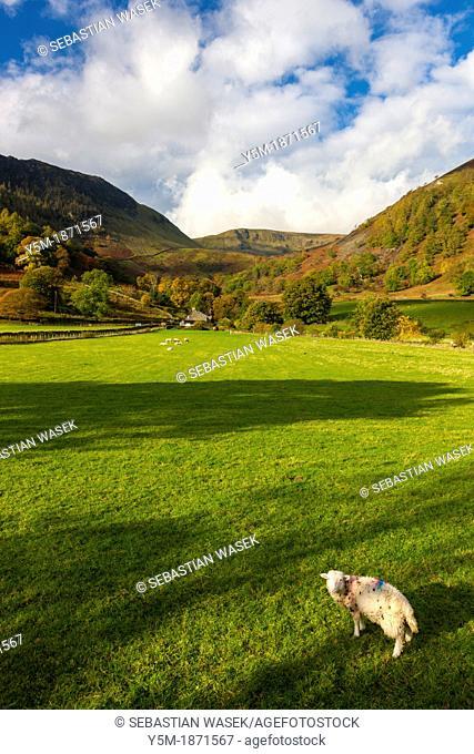 A view toward farmland in the Lake District National Park, Keswick, Cumbria, England, UK, Europe