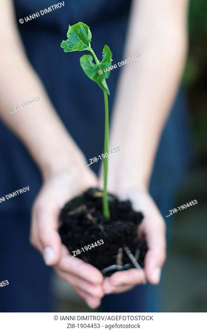 Person holds young plant in hands-selective focus