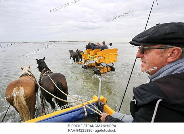 Mudflat carriage driver Jan Bruett drives his carriage through the mudflat to the island of Neuwerk, Germany, 20 September 2016