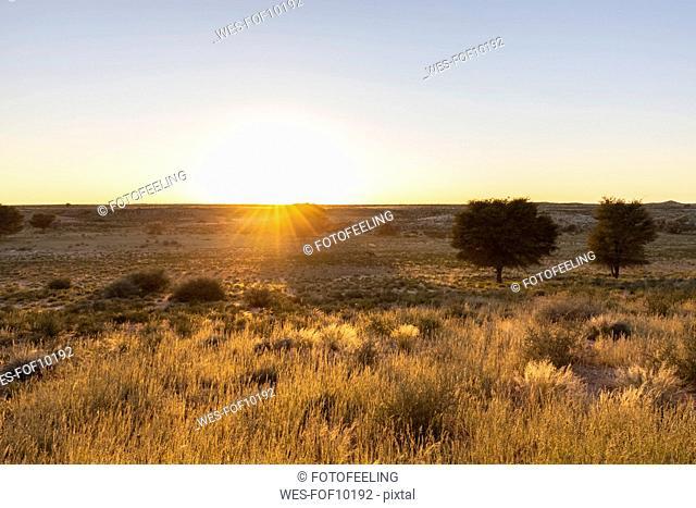 Botswana, Kgalagadi Transfrontier Park, Kalahari, landscape at sunrise