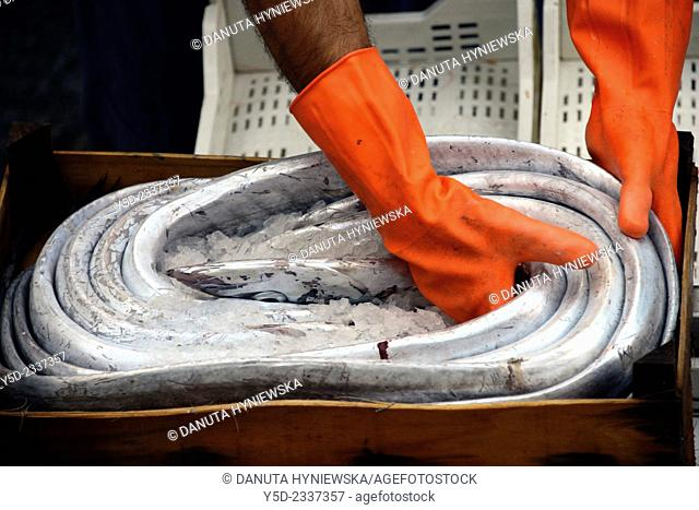 eel in ice, fish market, Catania, Sicily, Italy