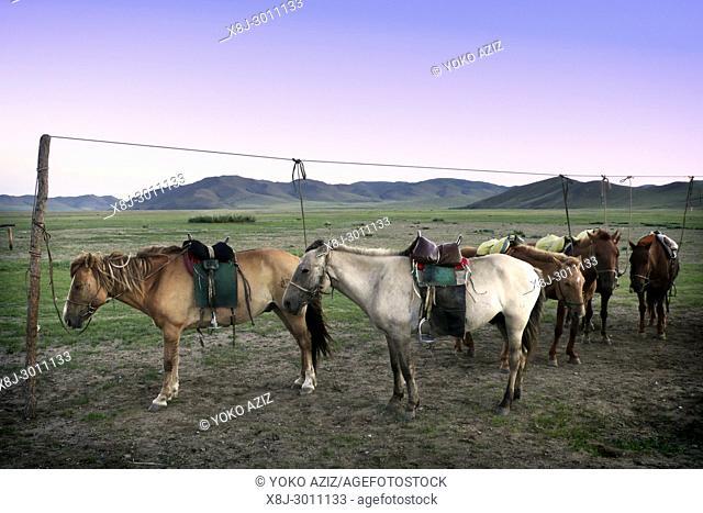 Horses, Gun Galuut, Mongolia