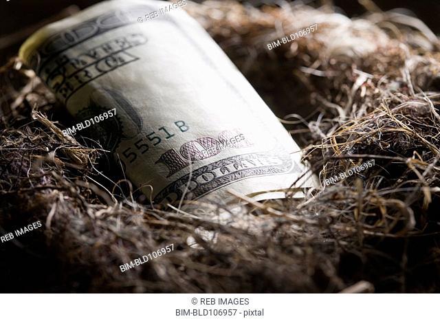 One hundred dollar bill in bird's nest