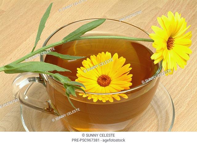 Medicinal herb-tea and Blossom of the medicinal plant Marigold, Calendula officinalis, Fiorranchio coltivato