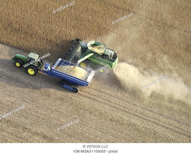 Farmer harvesting soybeans