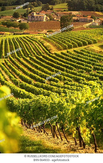 Scenic Vineyards, Saint Preuil Village, Grande Champagne De Cognac, Charente, France