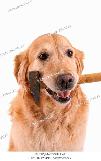 dog with hammer