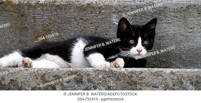 A black and white kitten on concrete steps