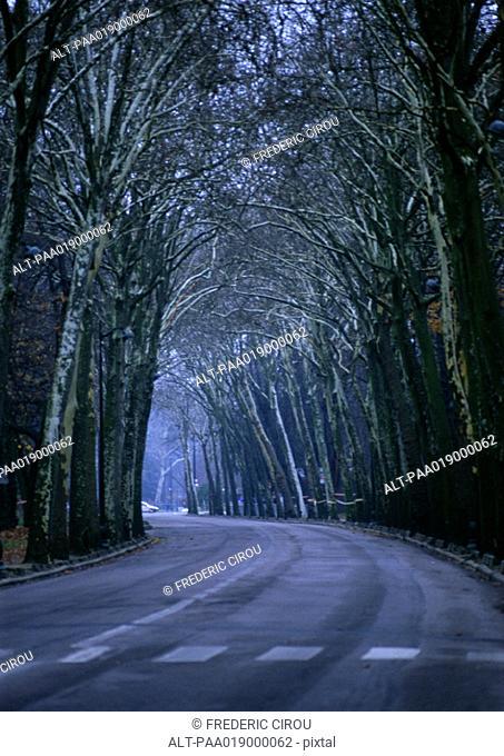 Road through tall trees