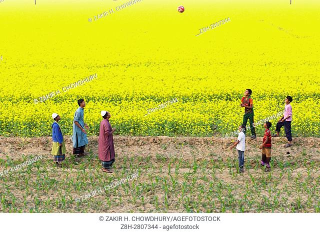 MANIKGONJ, BANGLADESH - JANUARY 08 : Children playing on mustard filed in Manikgonj, Bangladesh on January 08, 2016. . As winter deepens in this country that...
