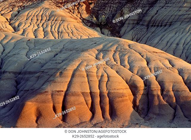 Evening light on eroded mudstones, Dinosaur Provincial Park, AB, Canada