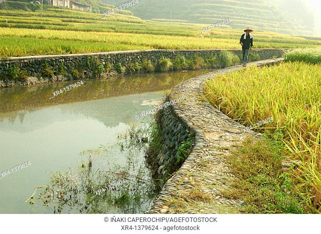 Rice terraces and people, Zhaoxing, Guizhou, China