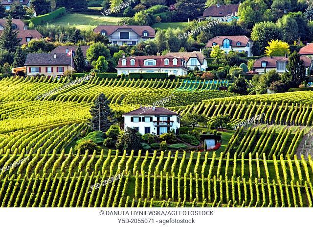 Europe, Switzerland, Canton Vaud, La Côte, Morges district, Aubonne, living in heart of vineyards, Autumn time