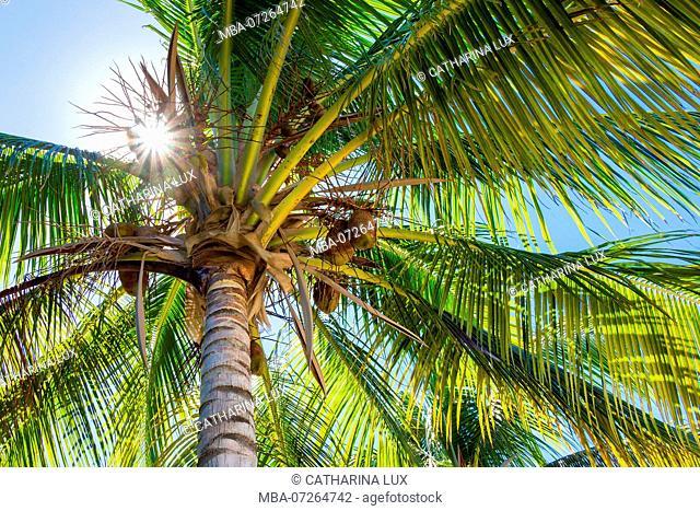 Cuba, Cayo Iguana, island, palm, sunbeams