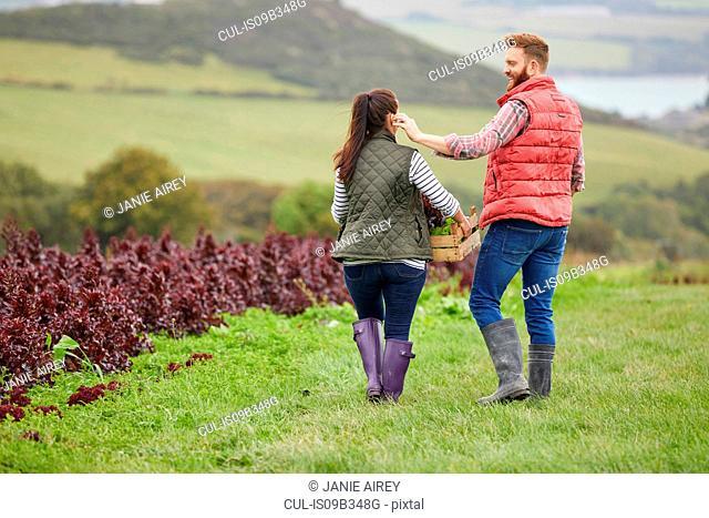 Rear view of couple on farm harvesting lettuce