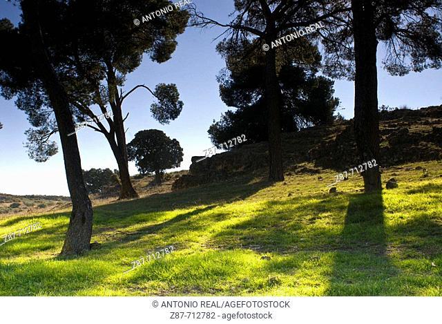 'Paraje de Botas'. Albacete province, Castilla-La Mancha. Spain