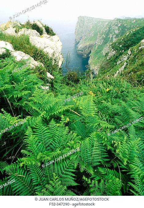 Infierno cliffs. Ribadesella. Asturias. Spain