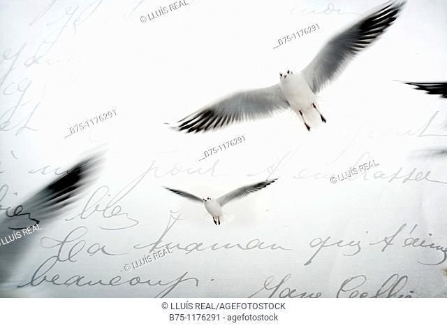 Letter, birds