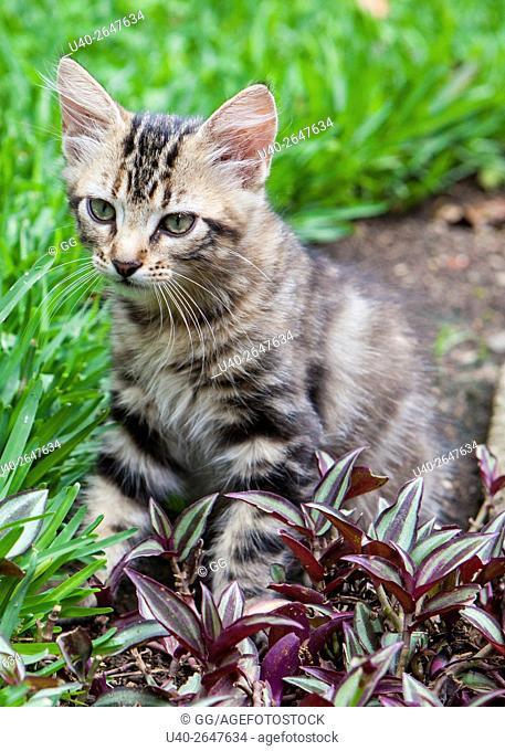 Kitten in garden